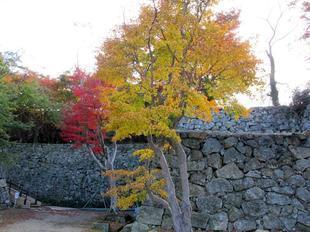 鶴山紅葉6.jpg