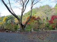 2015.11.11kasa-3.jpg