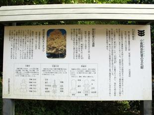 7奈義のイチョウ7.jpg
