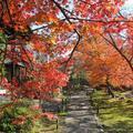もみじが美しい大雄寺です。