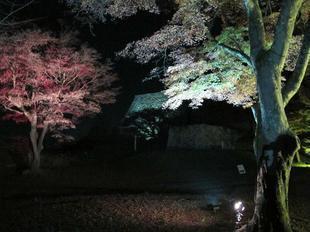 yorukaku32.jpg