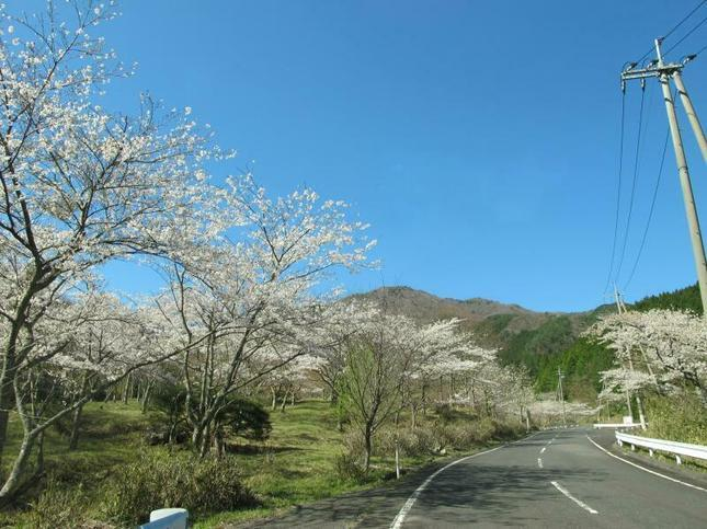 koegatawa2.jpg