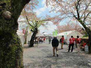 sakuramatsuri3.jpg