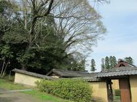 tateishi_4-6-21.jpg