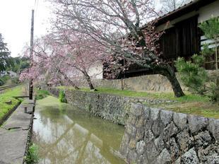 tateishi_4-6-38.jpg