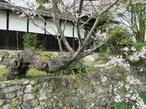 tateishi_4-6-9.jpg