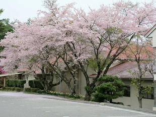 ueyama57.jpg