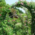 橋本さん宅のバラとお花畑