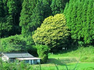 nanairo9.jpg
