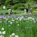 おじいちゃんとおばあちゃんの花しょうぶ園(作用町西新宿)