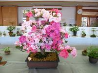 takano_satsuk16.jpg