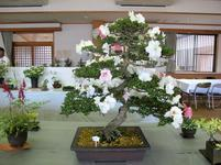 takano_satsuk26.jpg