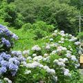 阿波の渓流茶屋にて滝まつりが開催されました。