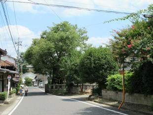 keyaki_nakayama12.jpg