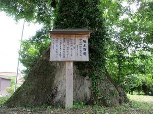 nakayama_muku12.jpg