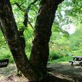森林公園(鏡野町)