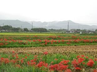 nagi-higan5.jpg