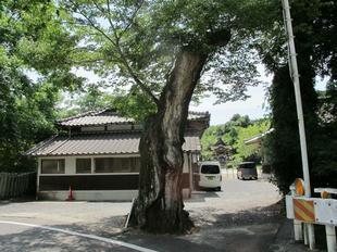 nakayamaki24.jpg