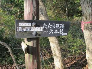 shinrinkouen12.jpg