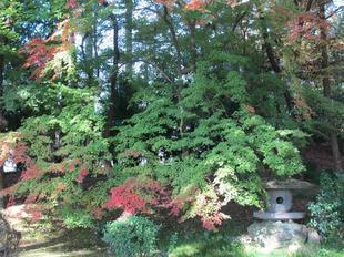 syuraku14.jpg