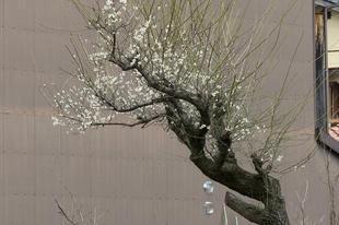 higashi22.jpg