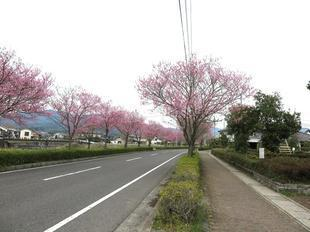 higashi-sakura10.jpg