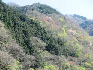 matsubouki8.jpg