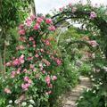 橋本家バラの庭園