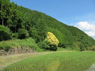 nanairogashi12.jpg