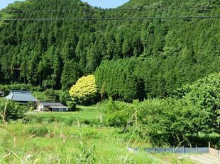 nanairogashi13.jpg