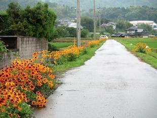 hananomichi16.jpg