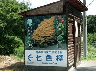 nanairo2017-8-5.jpg