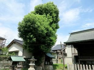 sumiyoshiki1-2.jpg