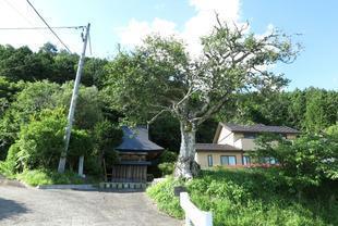 tsubaki-3.jpg