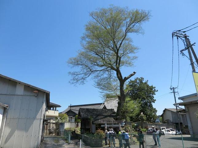 wakamiya-12.jpg