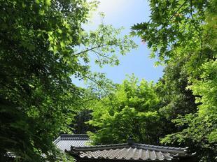 fumonji24.jpg