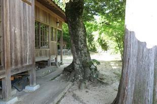 hirodo-ki-7.jpg