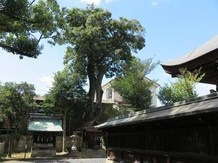 mukunoki-tokumori3.jpg