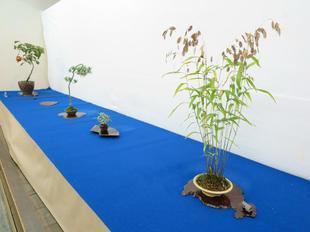 bonsai12.jpg