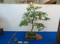 bonsai7.jpg
