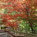 八塔寺川ダム公園(吉井川中流県立自然公園)