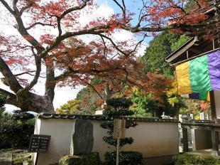 momiji_tera4.jpg