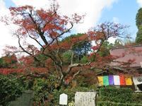 momiji_tera7.jpg