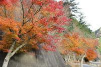 tsugawa11-23-4.jpg
