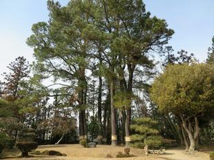 hi-syuraku3.jpg