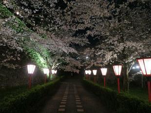 夜景19.jpg