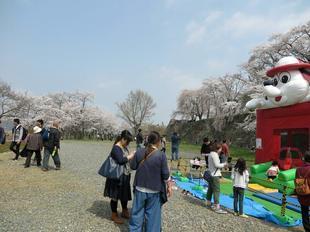 hanami24.jpg