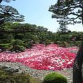 日本庭園「由志園」の3万輪の牡丹の花