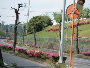 tsutsuji3.jpg