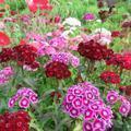 小椋さん宅の花畑